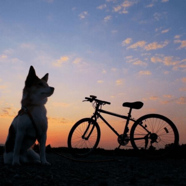 調査で使用する自転車